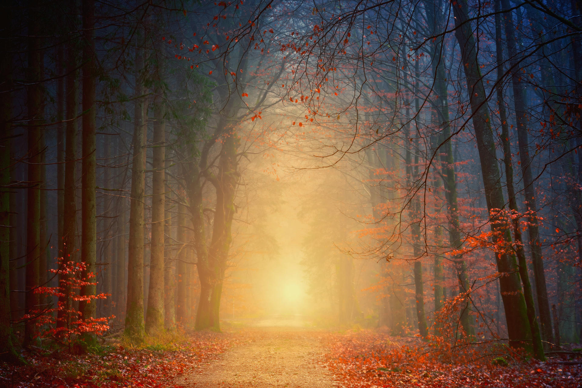 An illuminated path in a forest.